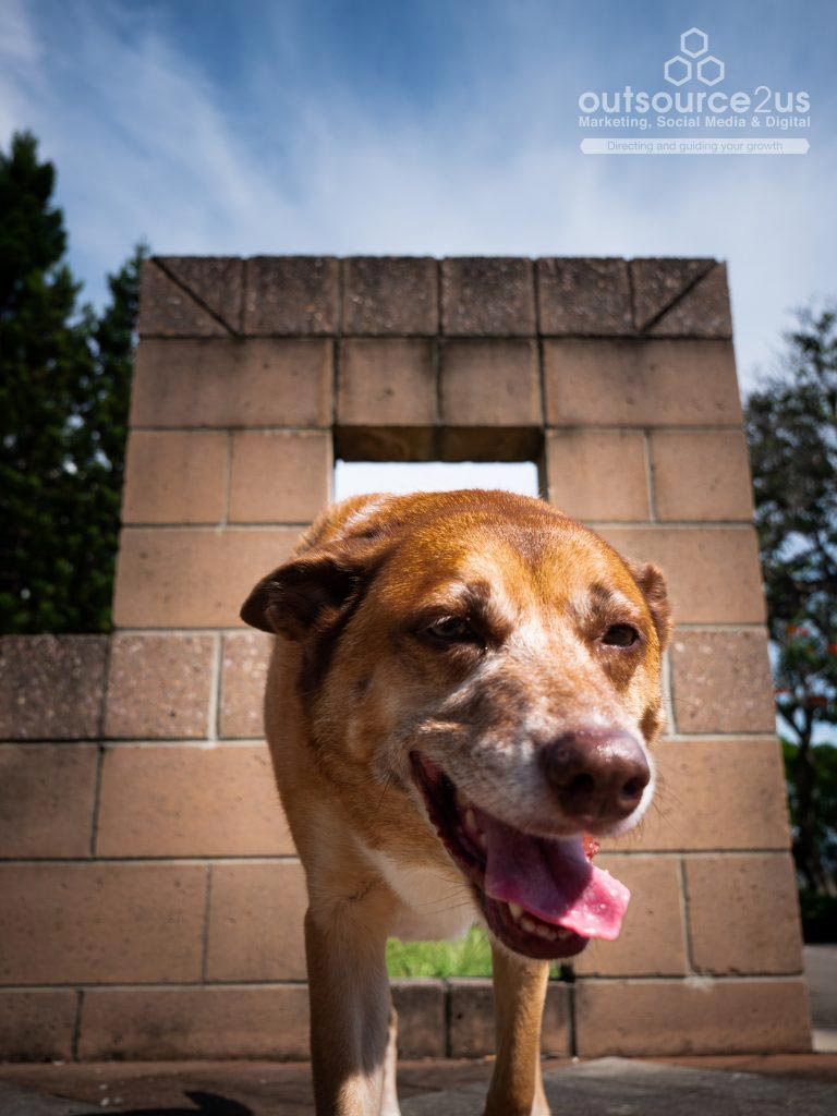 Brown dog smiling - Outsource To Us